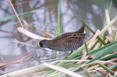 bird perched on grass at water's edge