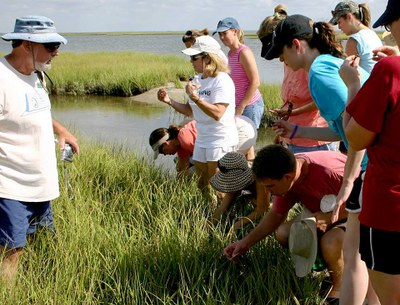 Group of people looking in grasses along the bay