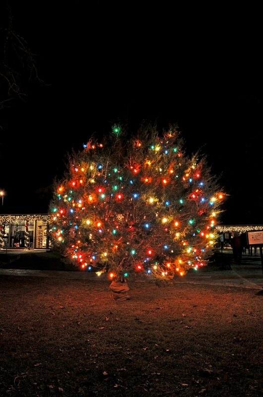 More information ... - 48th Annual LBJ Tree Lighting €� Texas Parks & Wildlife Department