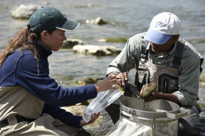 Biologists working in river