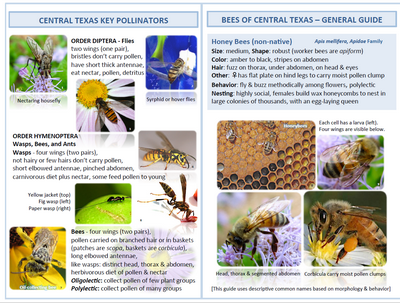 Central Texas Bee Guide