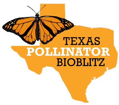 Texas Pollinator BioBlitz — Texas Parks & Wildlife Department