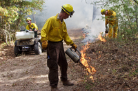 Prescribed burn at Bastrop State Park