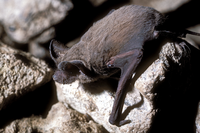Closeup shot of bat