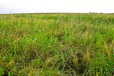Texas Ecoregions Texas Parks Wildlife Department