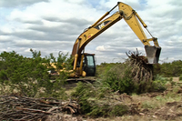 brush-clearing with backhoe