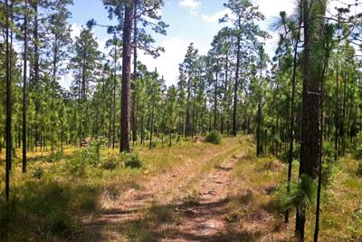 Texas Ecoregions Texas Parks Amp Wildlife Department