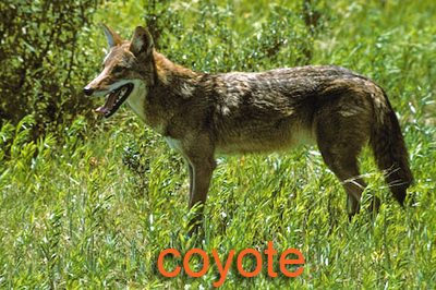 Non game animals texas parks wildlife department for Texas non game fish
