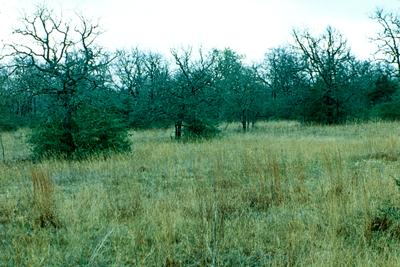 River Oaks Texas >> Texas Ecoregions — Texas Parks & Wildlife Department