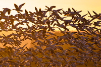 waterfowl taking off from lake