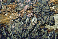 Bats on roof of cave