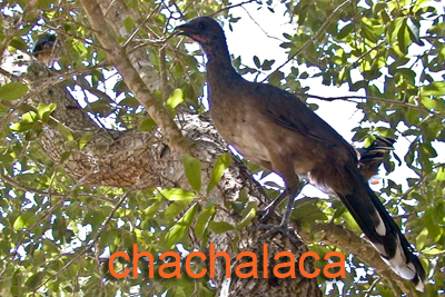 Game Birds — Texas Parks & Wildlife Department