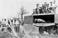 1950's photo of deer release at Engling WMA
