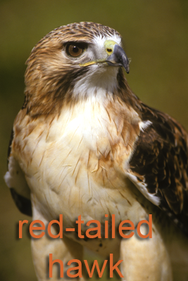 Threatened Endangered And Protected Animals Texas Parks