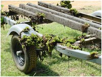 Giant Salvinia clinging to a boat trailer