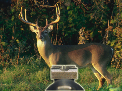 Open sight on deer