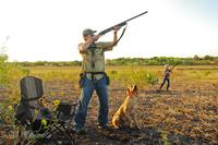 hunter taking aim at dove in flight