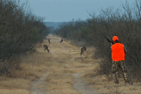 Hunter stalking deer