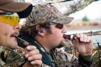 Hunters in blind using duck calls