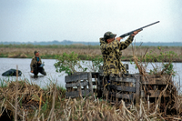 Duck hunter shooting from a duck blind