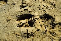 Close-up of animal tracks