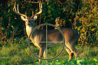 White-tailed deer with crosshairs positioning indicated