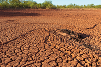 drought stricken, cracked earth