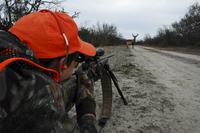 Bipod OTS bigger buck