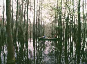 Hey tortuga tex tell me more what can you tell us about for Caddo lake fishing report