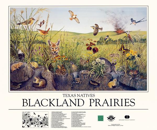 Blackland Prairie poster
