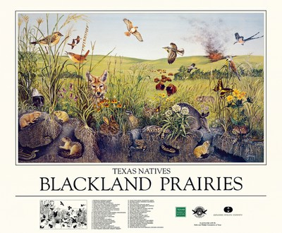 Blackland Prairies Poster