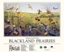 Blackland Prairies Poster