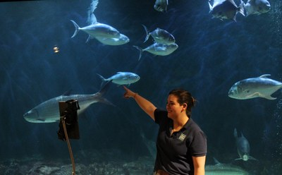 Sea Center employee filming program in front of huge aquarium with fish swimming.