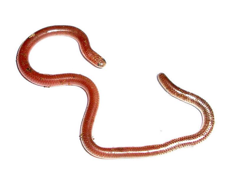 animals cute Cool weird water fish ocean sea snake ... |Snake Like Water Animals