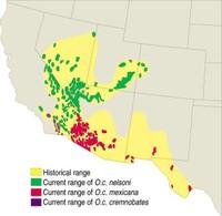 Map where Bighorns travel