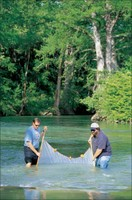 Scientists Seining Fish Samples