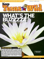 Cover-What's the Buzzzz