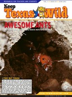 Cover Ants - June 2011