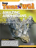 Cover-Amazing Amphibians