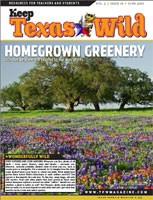 Cover-Hometown Greenery