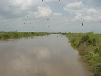 River Lower Course
