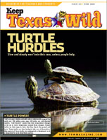 cover_turtles.jpg
