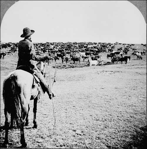 Texas Cattle Drives Texas Parks Wildlife Department