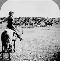 Cowboy 1902