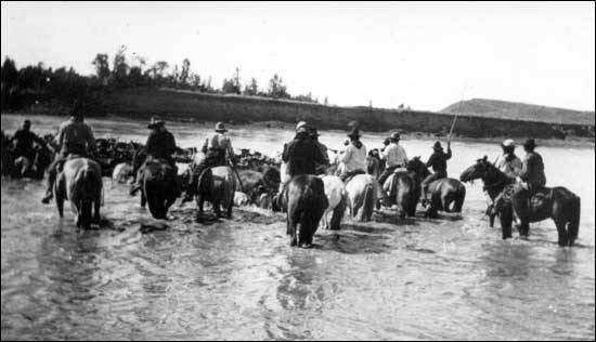a history of cowboys and cattle drive in early texas Today they are a standard piece of cowboy equipment and, as with most horse equipment history early spurs, believed to have been used by the roman legions of julius caesar, have been unearthed in england early roman, greek.