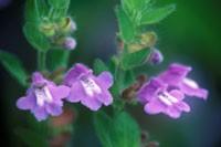flower133h.jpg