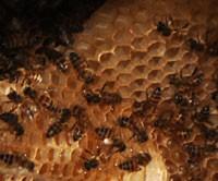 honeycomb200.jpg