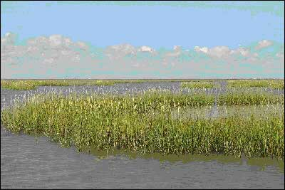 wetland biomes and the creatures and plants living within them Native plants are plant species that were fish, insects, and other living things, help to make each biome are the animal species that live within them.