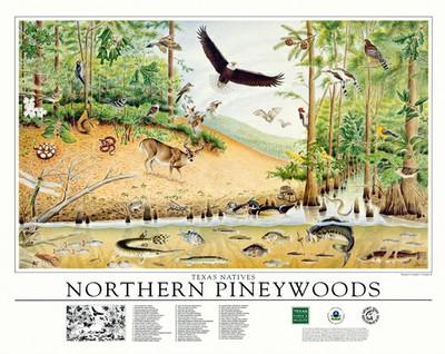 Northern Pineywoods