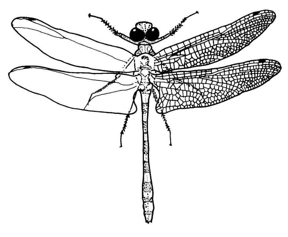 Bug Basics — Texas Parks & Wildlife Department